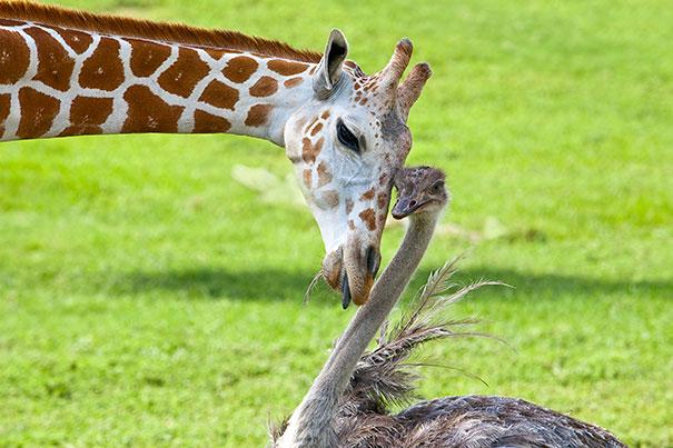 amicizia interspecie animali2