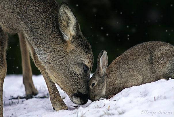 amicizia interspecie animali22