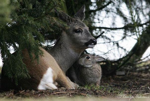 amicizia interspecie animali23