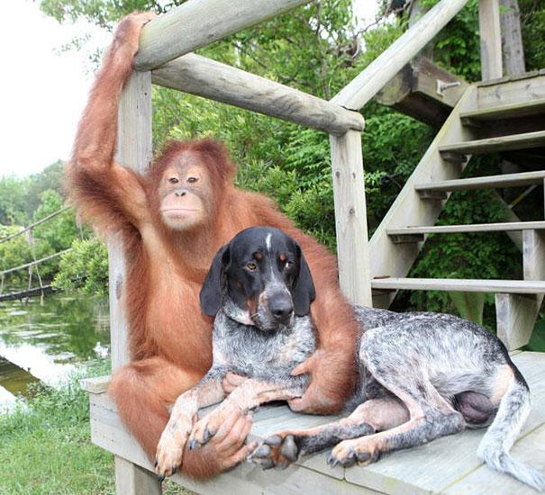amicizia interspecie animali24