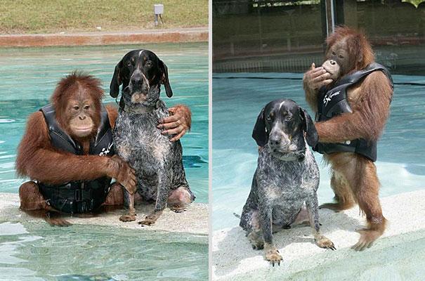 amicizia interspecie animali25