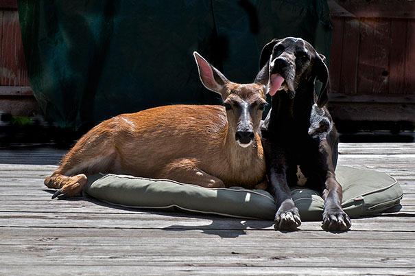 amicizia interspecie animali27