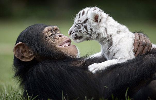 amicizia interspecie animali29