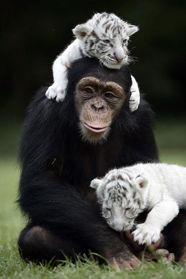 amicizia interspecie animali30