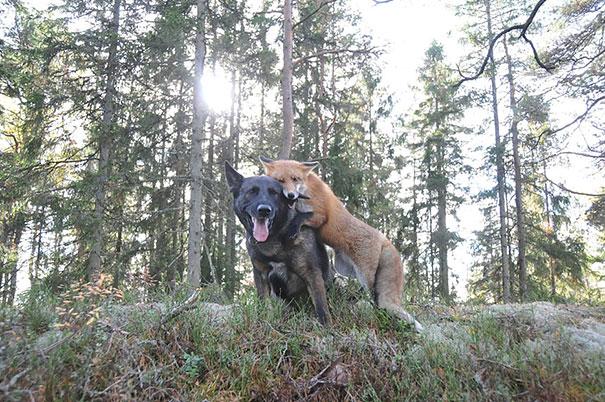 amicizia interspecie animali4