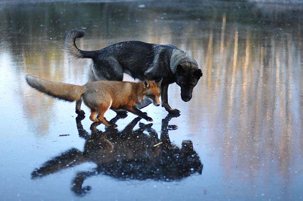 amicizia interspecie animali5