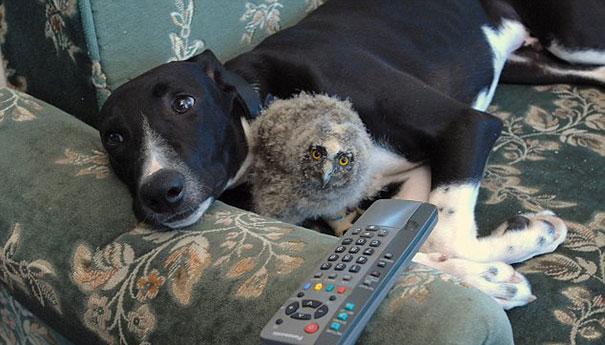 amicizia interspecie animali7