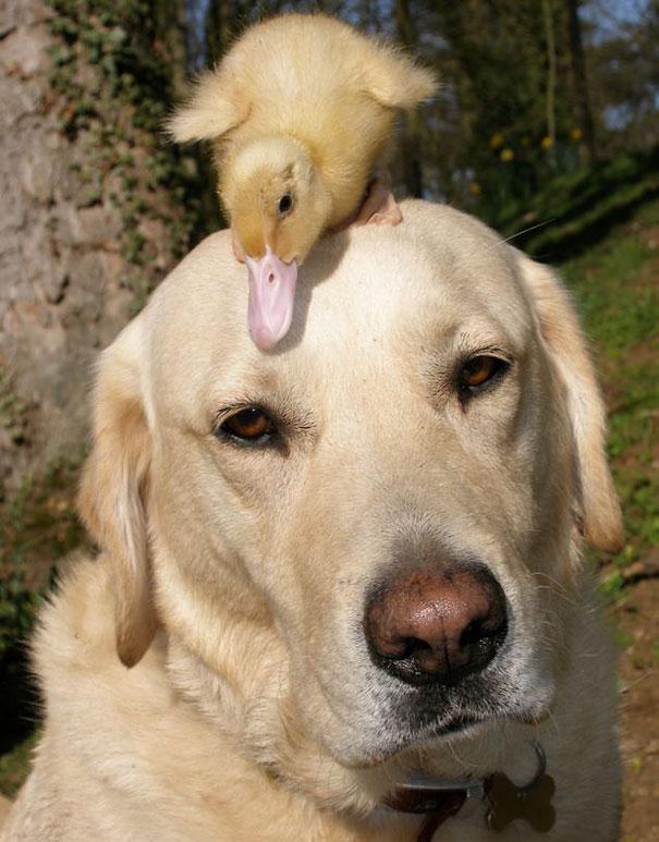amicizia interspecie animali8