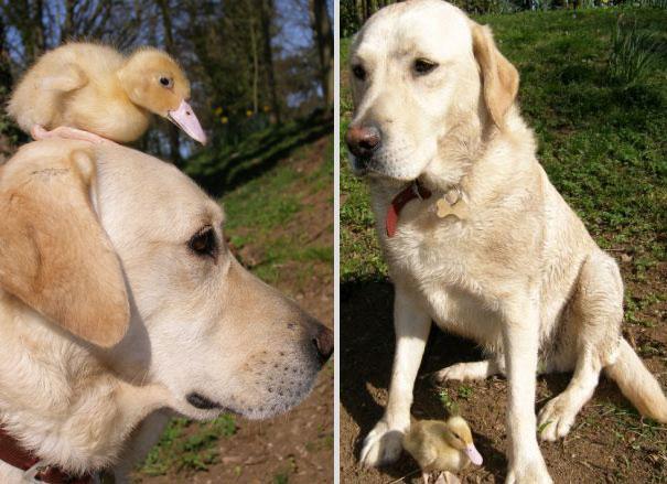 amicizia interspecie animali9