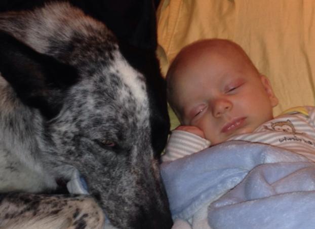 cani e neonati foto