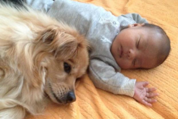 cani e neonati foto11