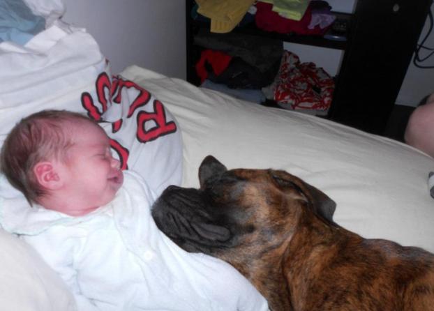 cani e neonati foto12