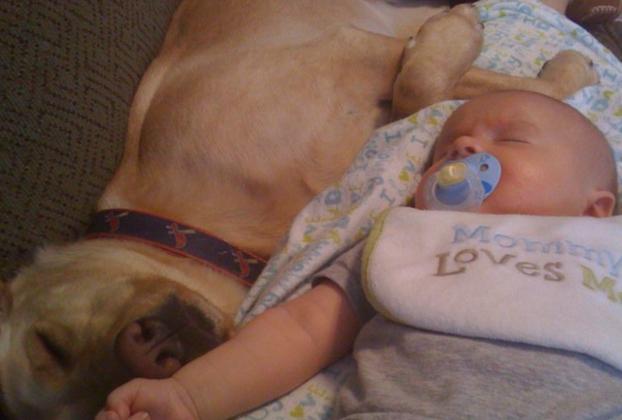 cani e neonati foto14