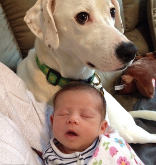 cani e neonati foto2