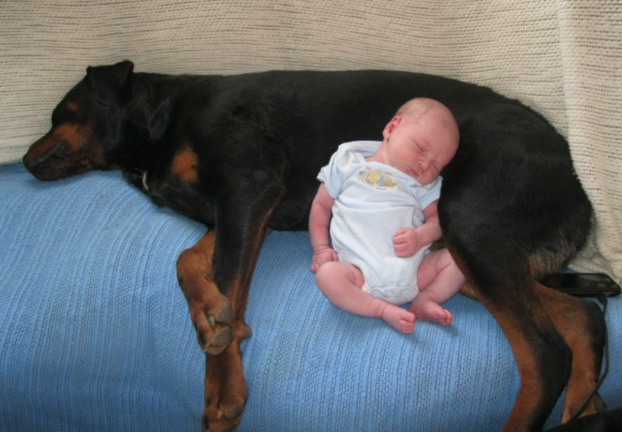 cani e neonati foto6