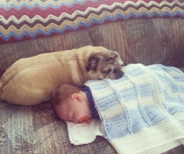 cani e neonati foto7