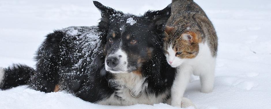 pericoli animali freddo invernale
