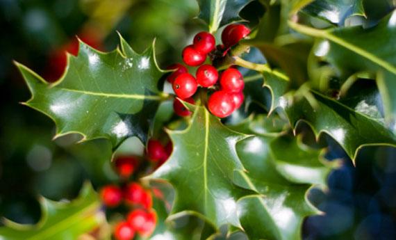 piante natalizie pericolose per cani e gatti