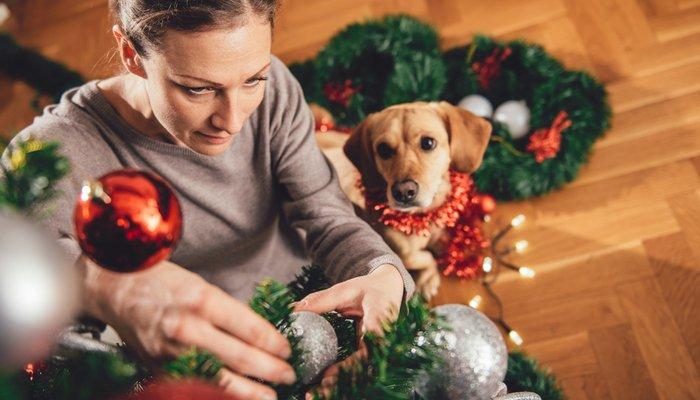 piante pericolose per cani e gatti3