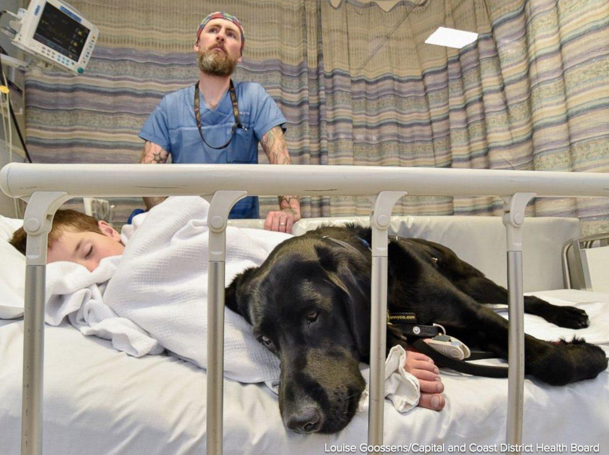 Labrador-retriever sostiene bambino autistico in ospedale