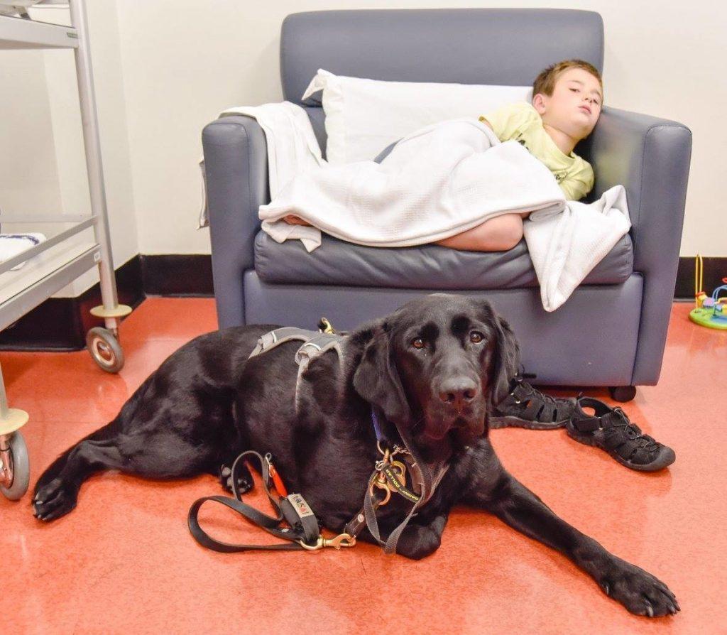 Labrador-retriever sostiene bambino autistico in ospedale1