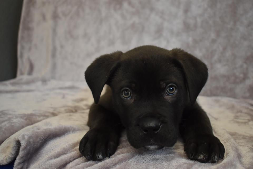Ronnie-primo-cane-abbandonato-2018-1