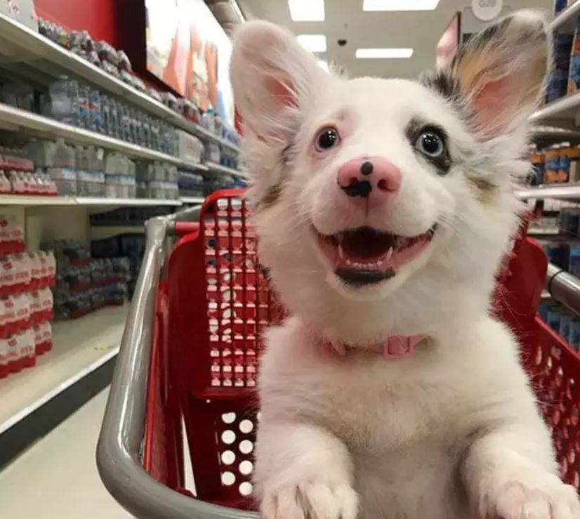cane al supermercato felicità1