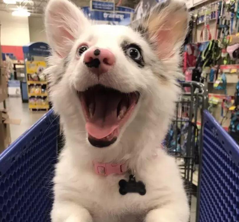 cane al supermercato felicità2