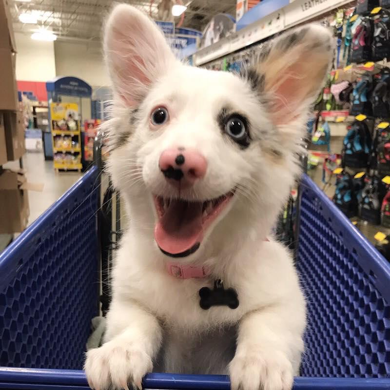 cane al supermercato felicità3