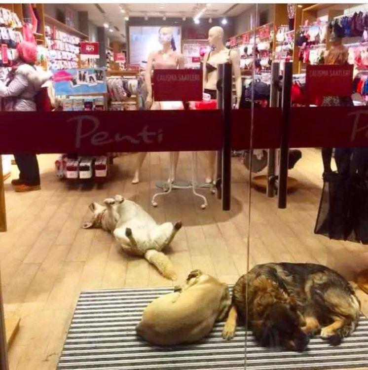commercianti accolgono cani randagi per proteggerli dal freddo1