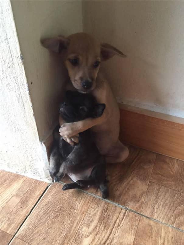 due cani inseparabili2
