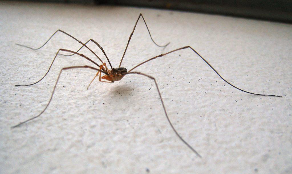 perché non bisogna uccidere i ragni