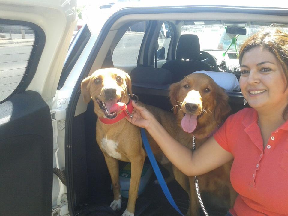 salvataggio cane ricoperto di tumori3