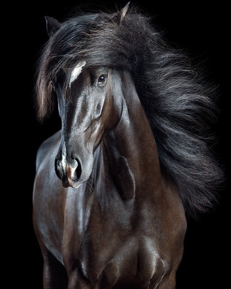 animali selvatici foto cavallo