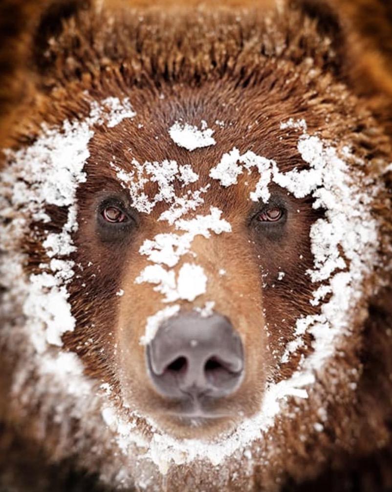 animali selvatici foto orso