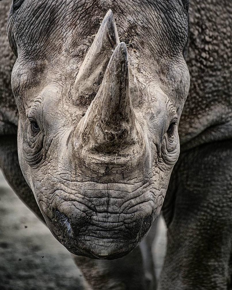 animali selvatici foto rinoceronte