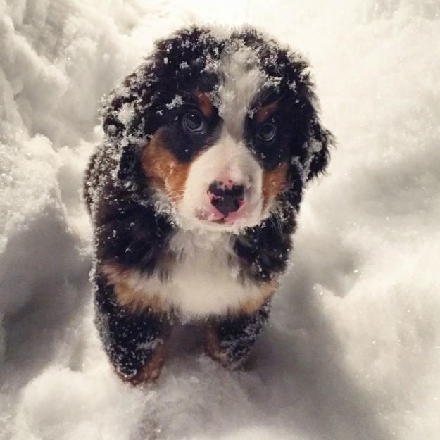 cani che giocano con la neve12