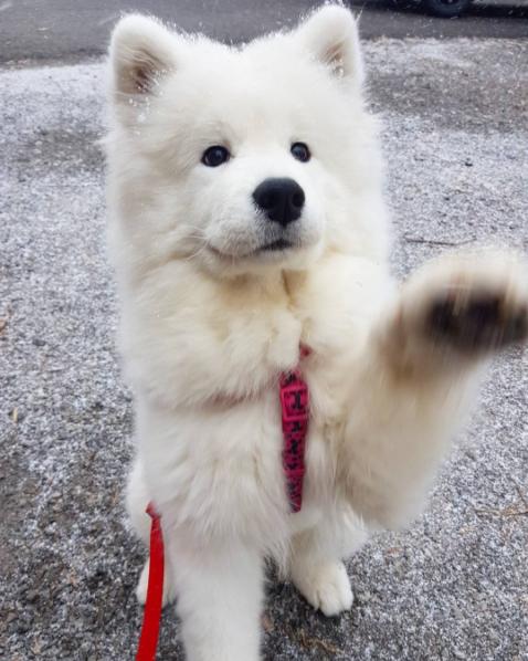 cani che giocano con la neve13