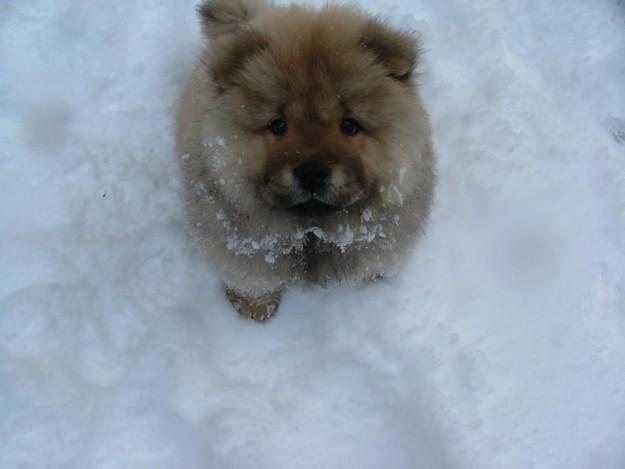cani che giocano con la neve8