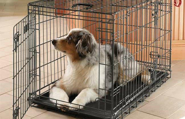 cane in gabbia durante assenza