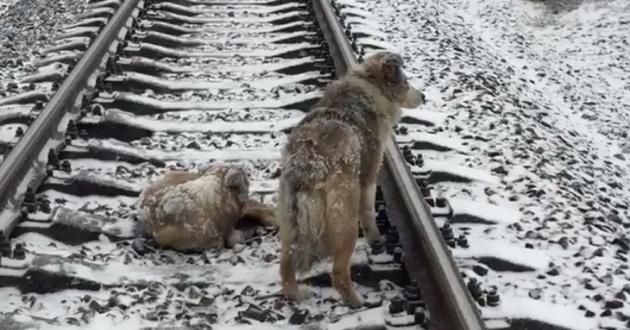 salvataggio cani bloccati sui binari