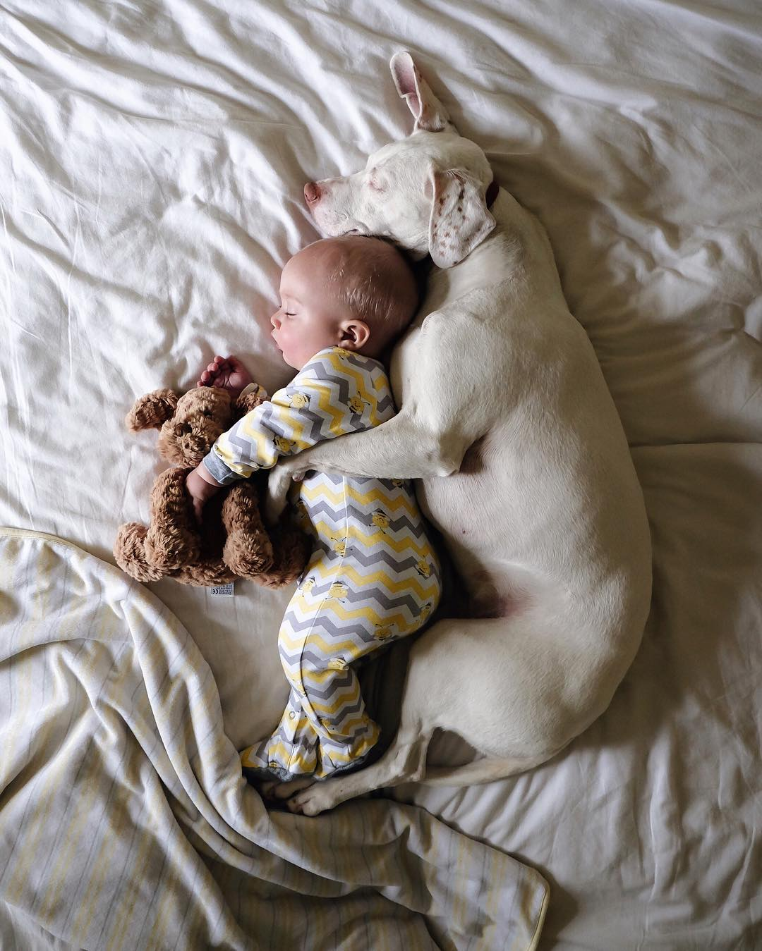 cane dorme con la bambina