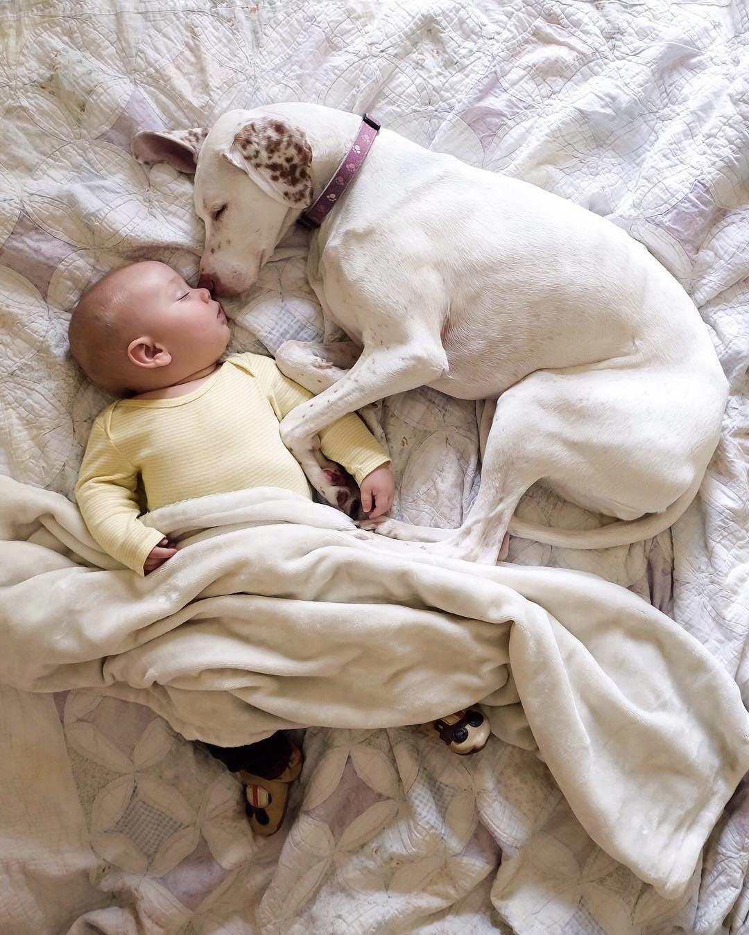cane dorme con la bambina1