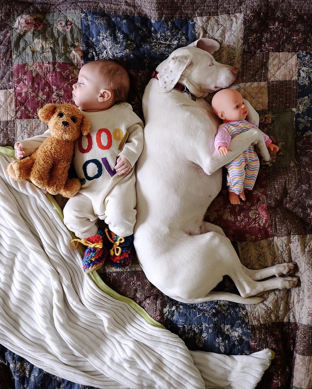 cane dorme con la bambina3