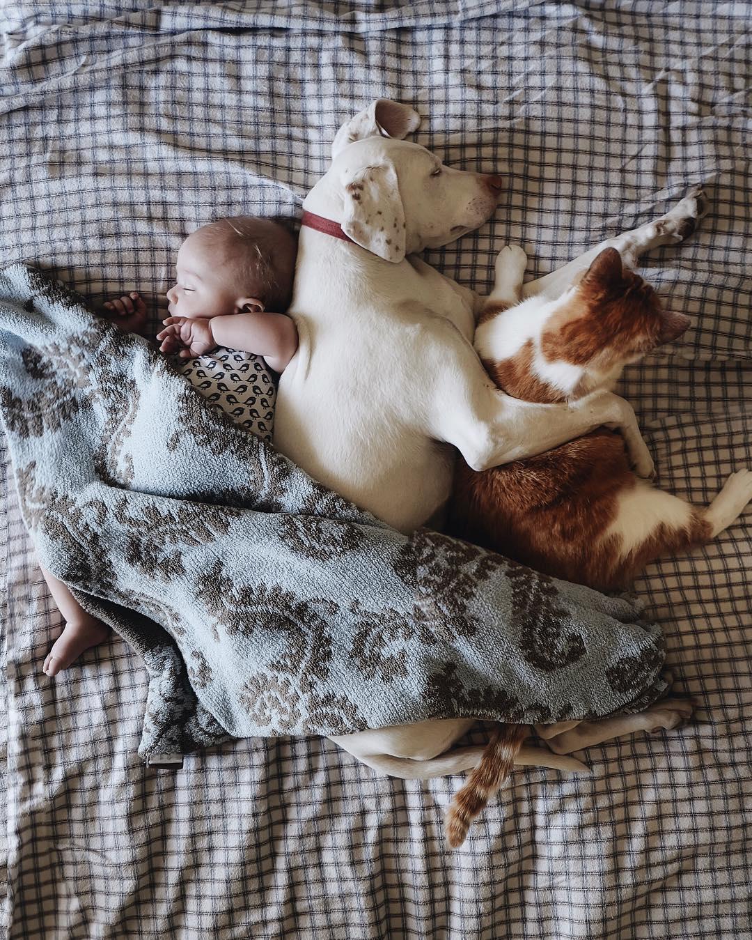 cane dorme con la bambina5