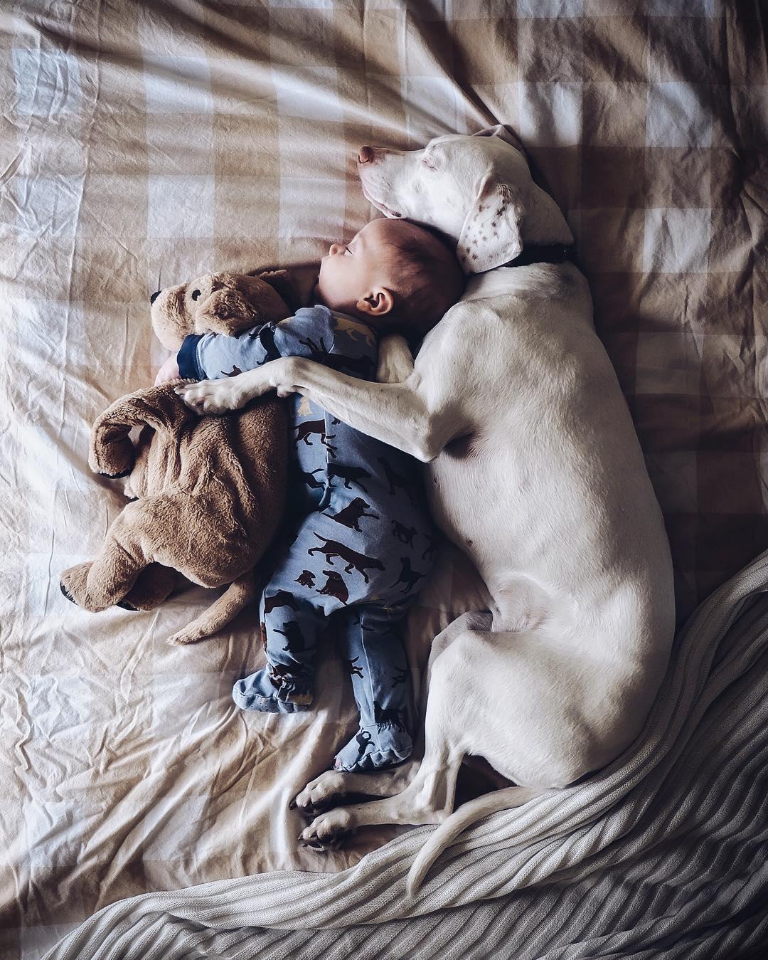 cane dorme con la bambina6