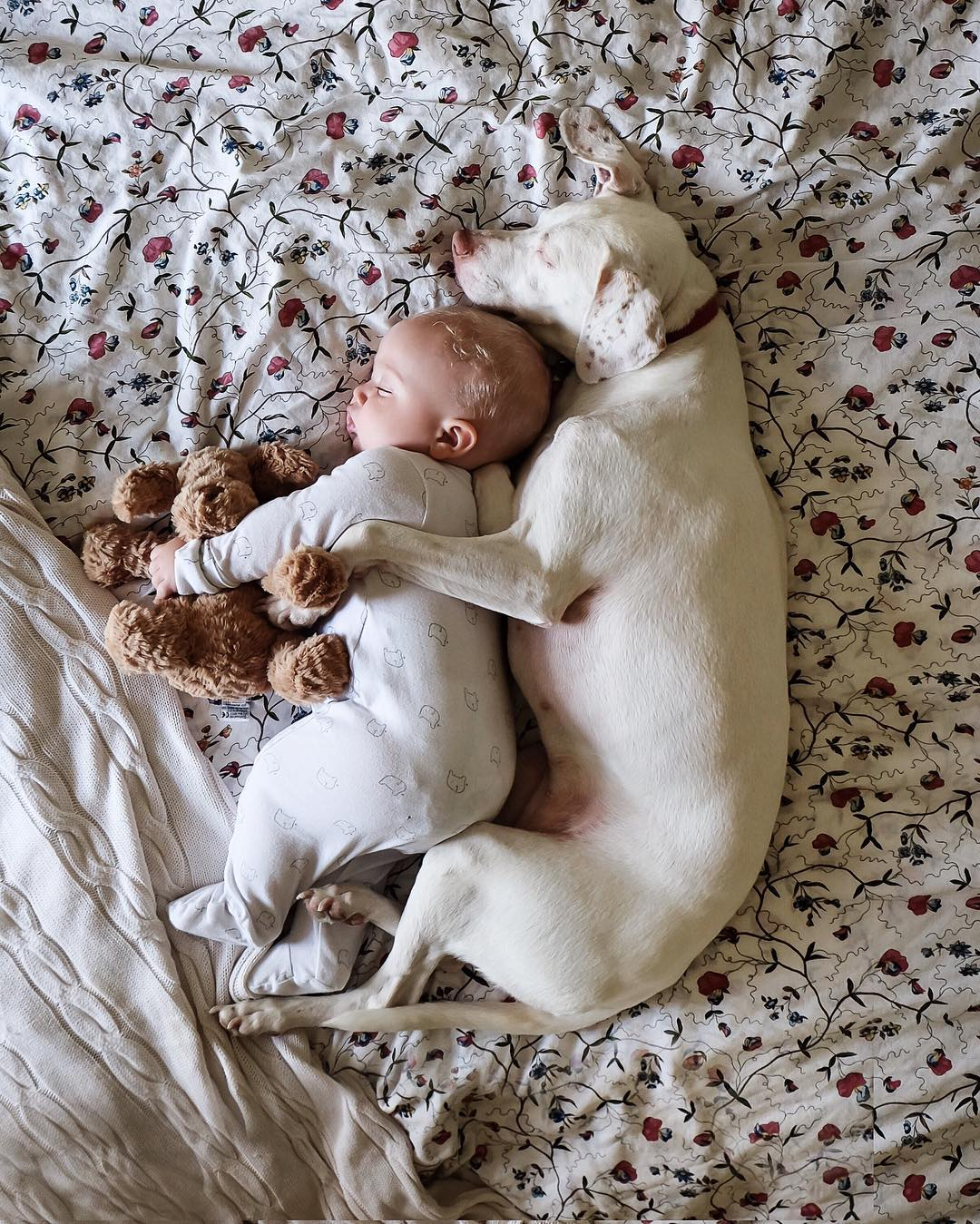 cane dorme con la bambina8