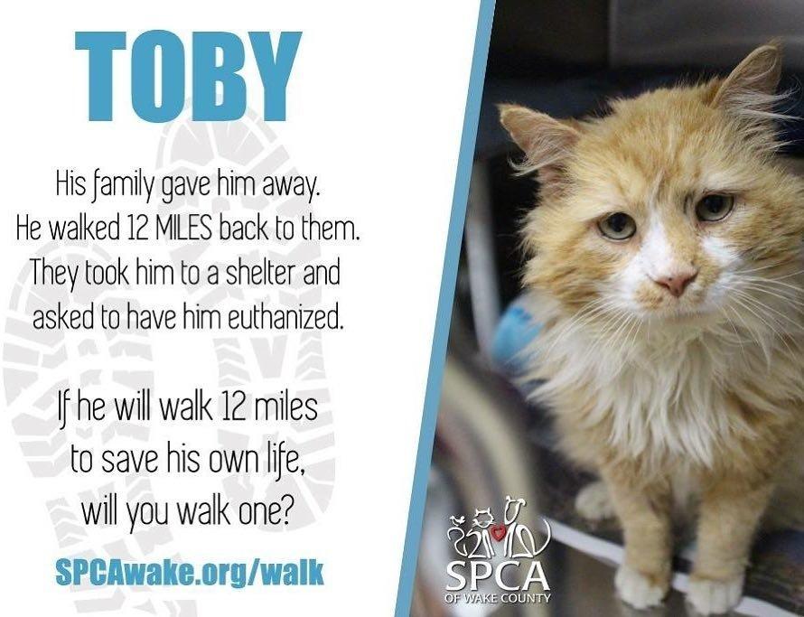 gatto abbandonato Toby percorre 12 km per ritrovare casa