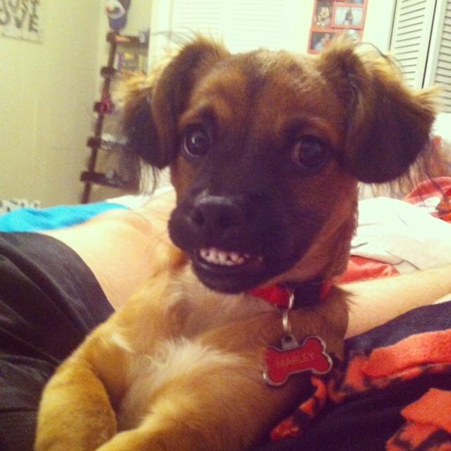 cani che sorridono1