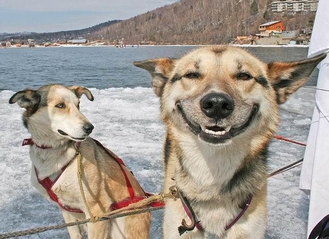 cani che sorridono10